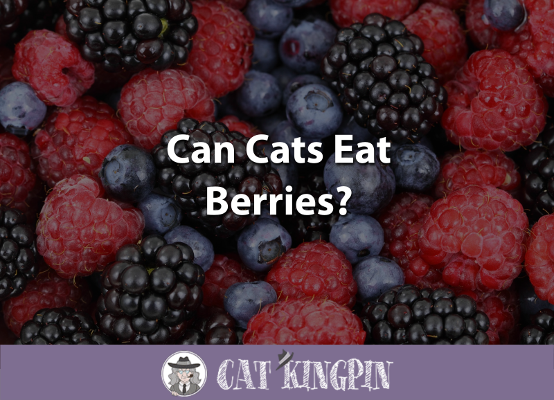 Can Cats Eat Berries