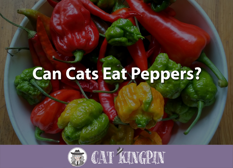 Can Cats Eat Peppers