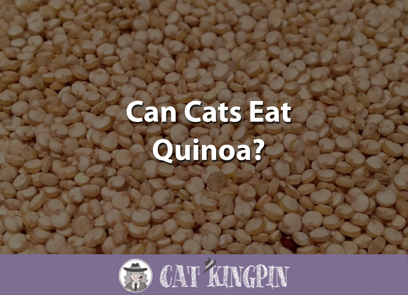 Can Cats Eat Quinoa