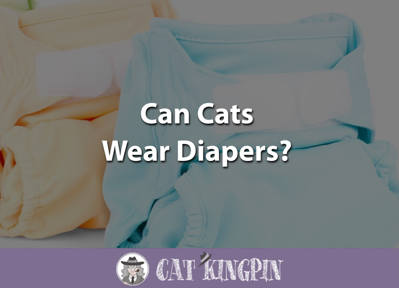 Can Cats Wear Diapers
