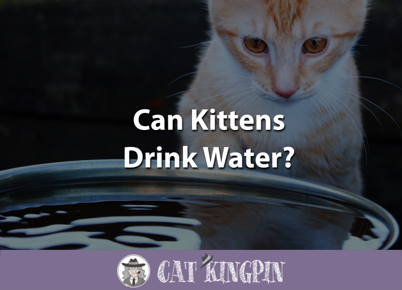 Can Kittens Drink Water