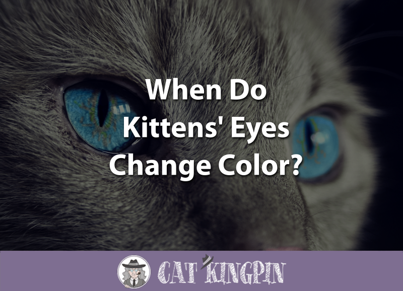 When Do Kittens Eyes Change Color