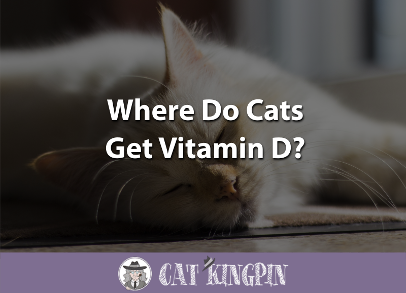 Where Do Cats Get Vitamin D
