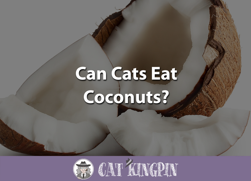 Can Cats Eat Coconuts