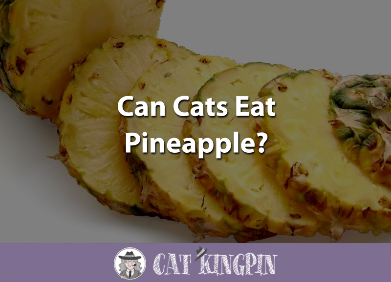 Can Cats Eat Pineapple