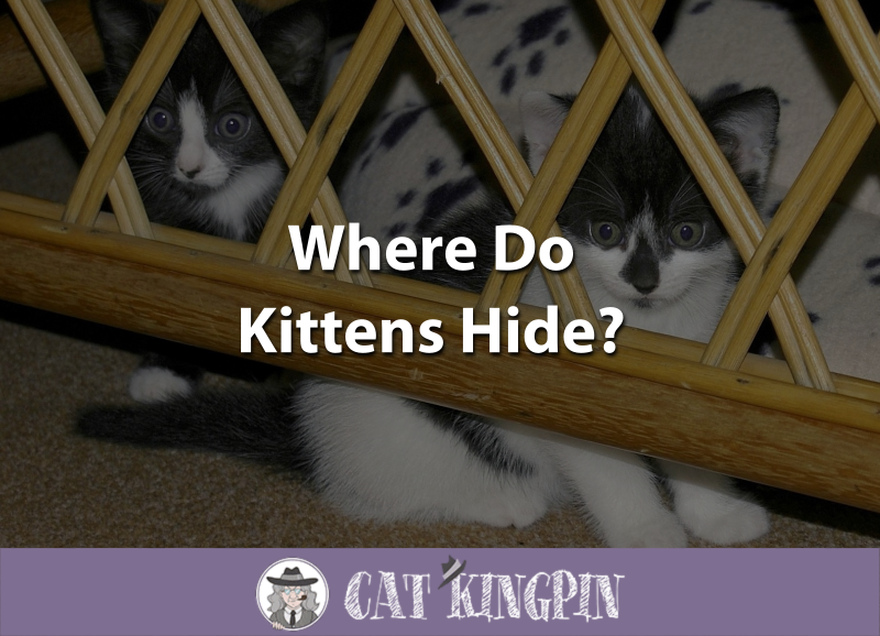 Where Do Kittens Hide