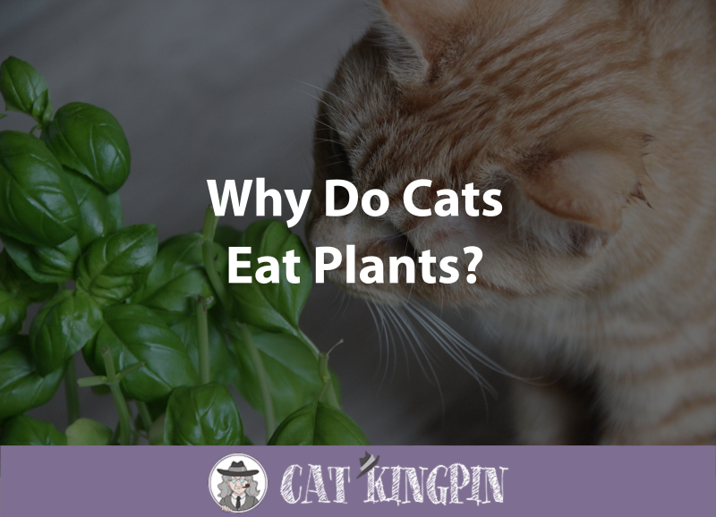 Why Do Cats Eat Plants