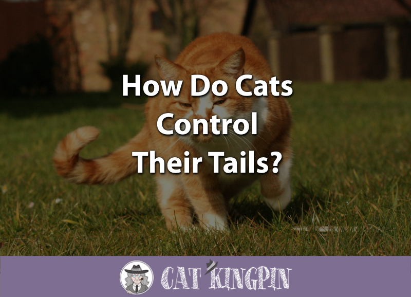 how do cats control their tails