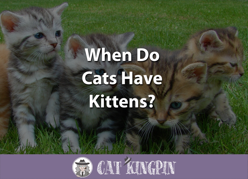 When Do Cats Have Kittens