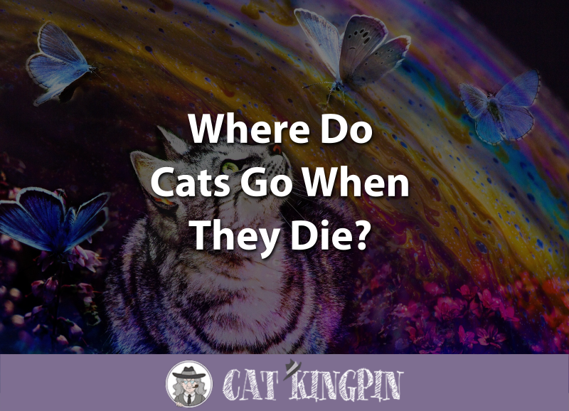 Where Do Cats Go When They Die