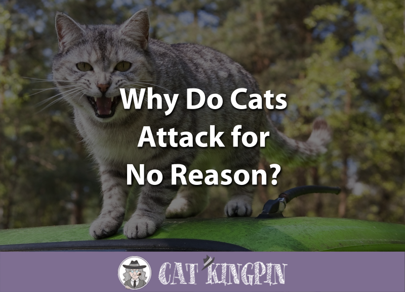 Why Do Cats Attack for No Reason