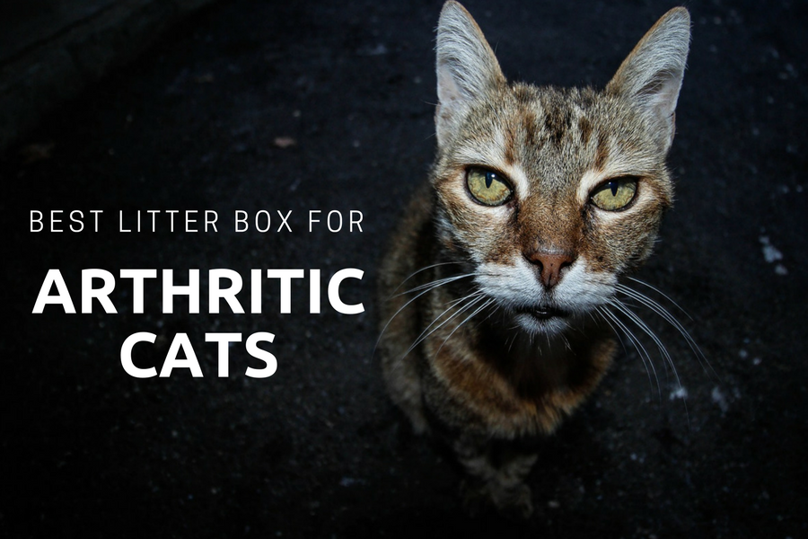 best litter box for arthritic cats