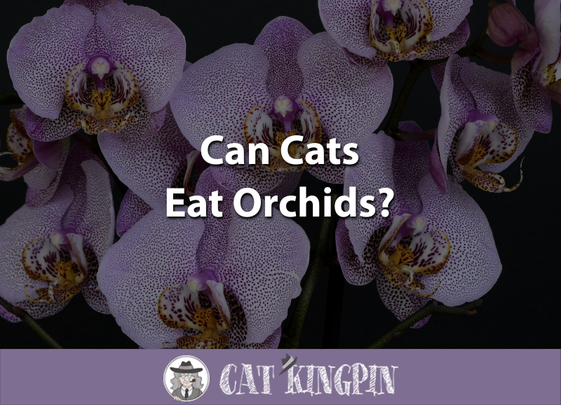 Can Cats Eat Orchids