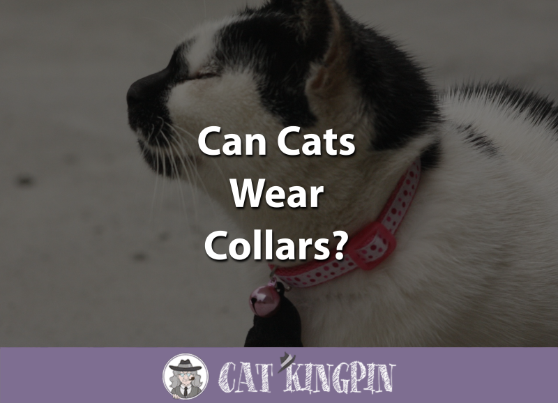 Can Cats Wear Collars