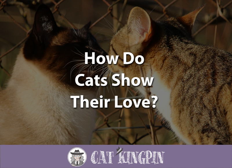 How Do Cats Show Their Love