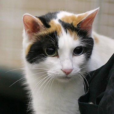 Where Can I Adopt A Cat In Washington Indiana