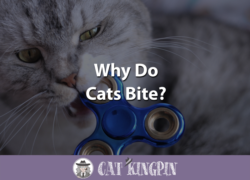 Why Do Cats Bite