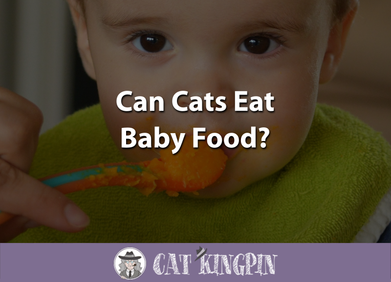 Can Cats Eat Baby Food