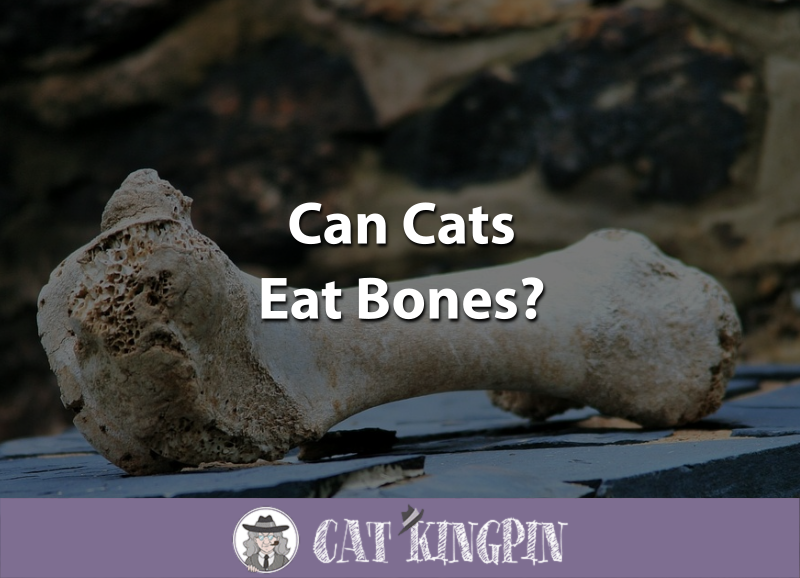 Can Cats Eat Bones