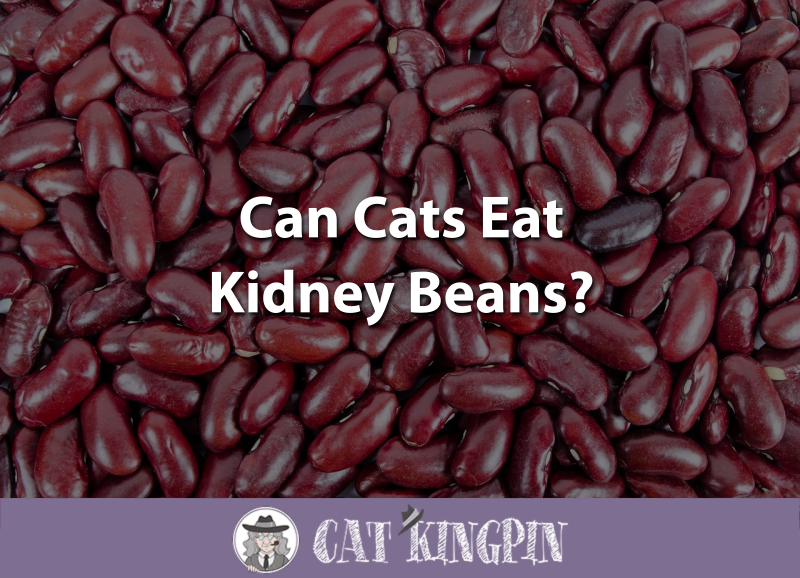 Can Cats Eat Kidney Beans