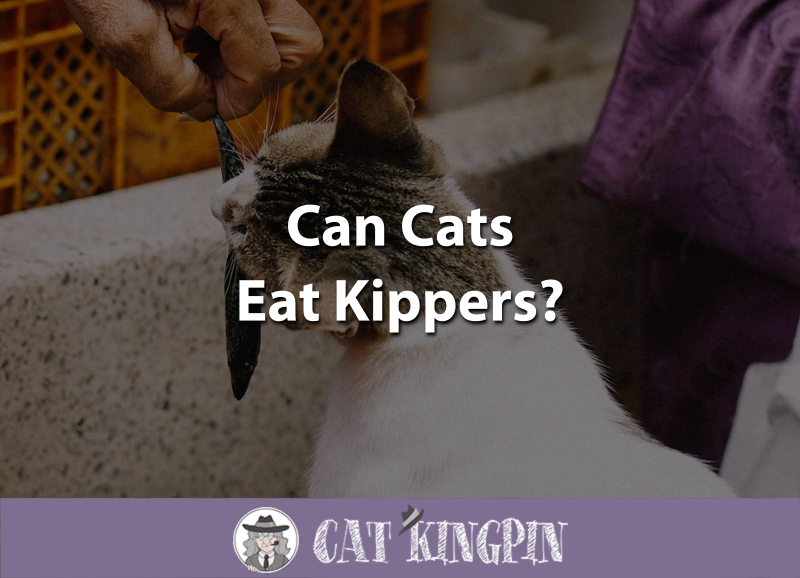 Can Cats Eat Kippers