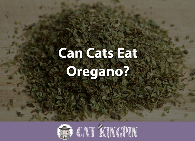 Can Cats Eat Oregano