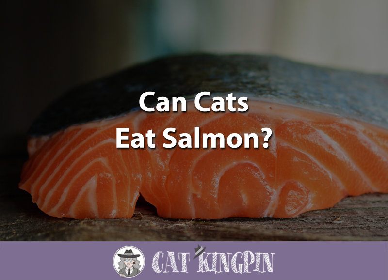 Can Cats Eat The Skin Of Salmon