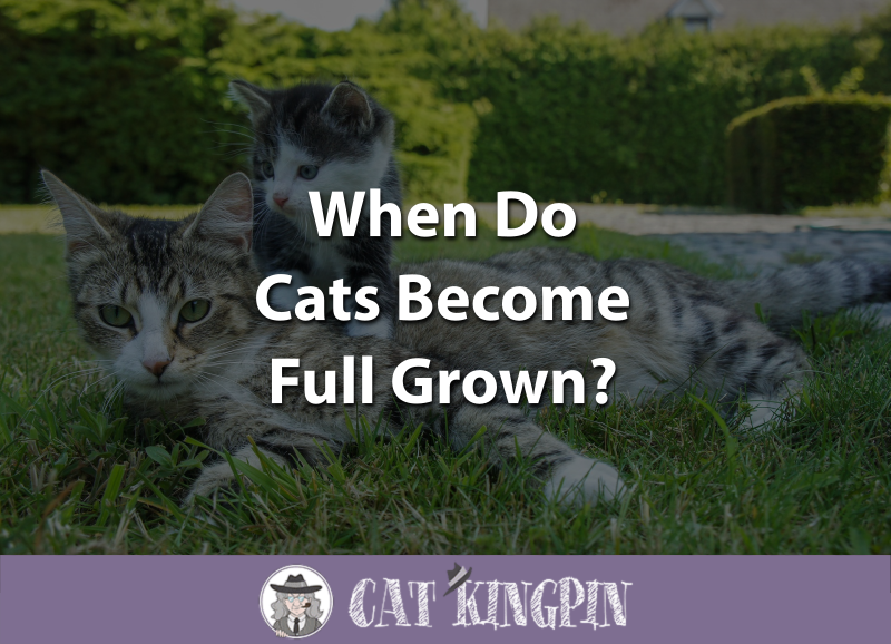 When Do Cats Become Full Grown