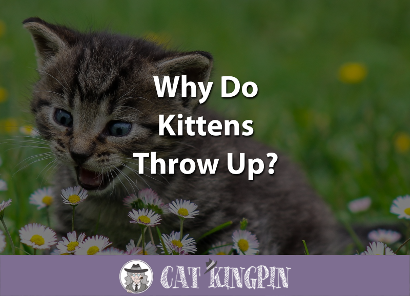 Why Do Kittens Throw Up