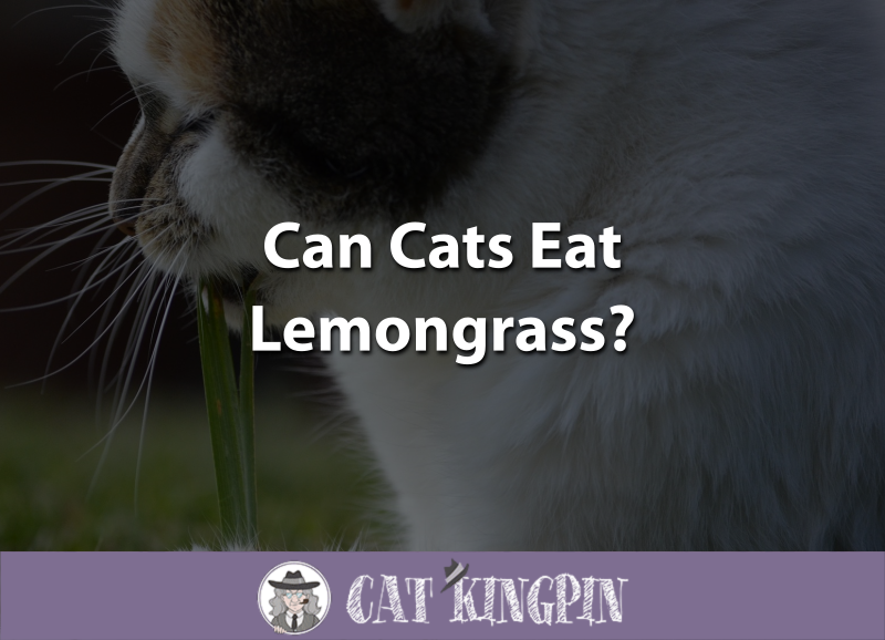 can cats eat lemongrass