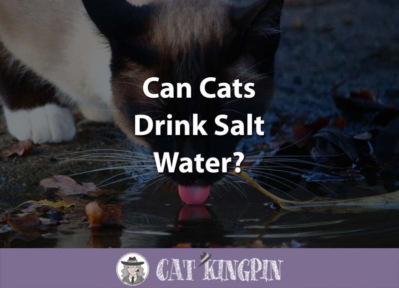 Can Cats Drink Salt Water