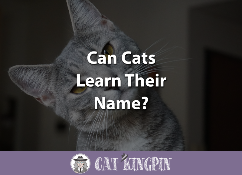 Can Cats Learn Their Name