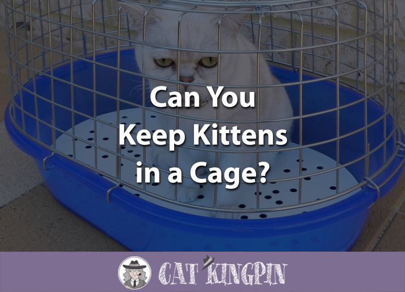Can You Keep Kittens in a Cage