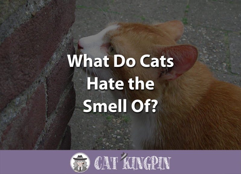 What Do Cats Hate the Smell Of
