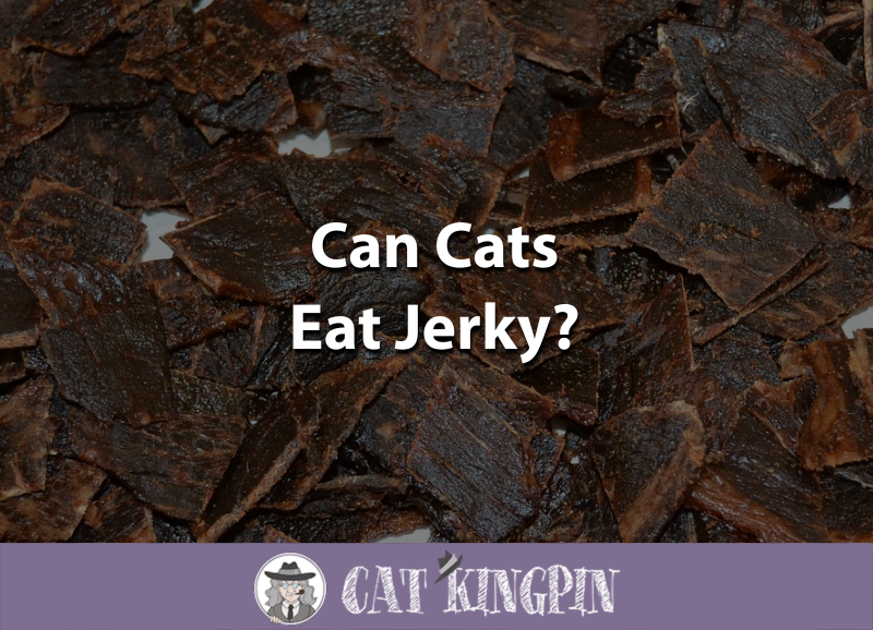 Can Cats Eat Jerky