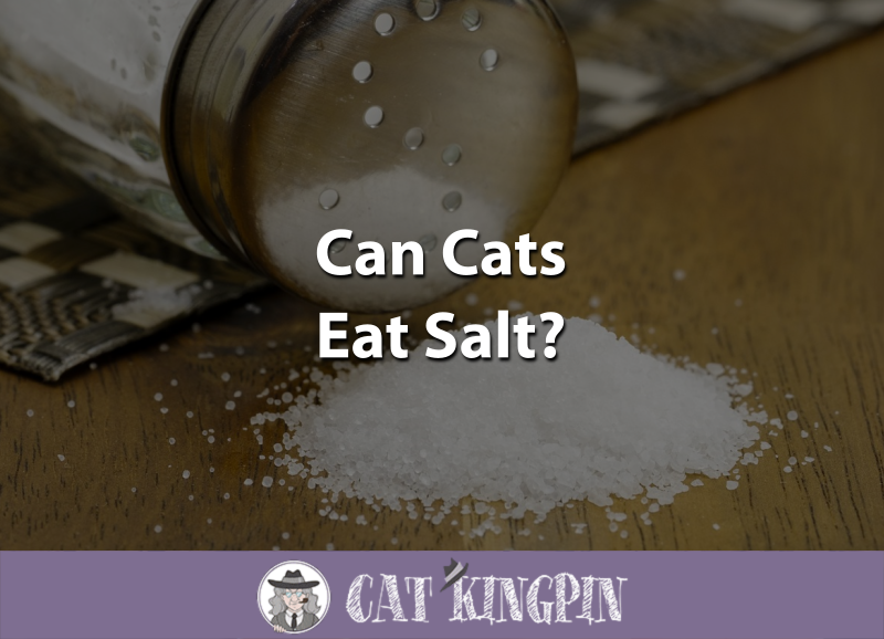 Can Cats Eat Salt
