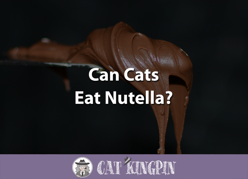 Can Cats Eat Nutella