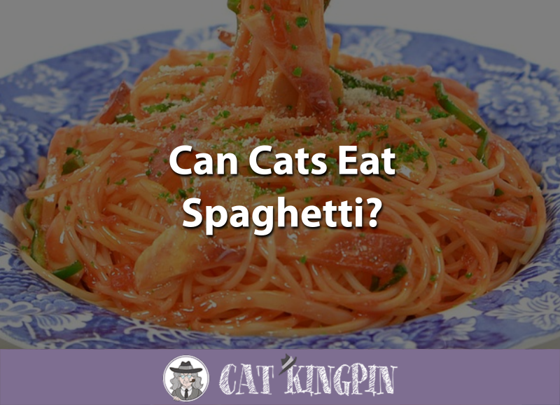 Can Cats Eat Spaghetti