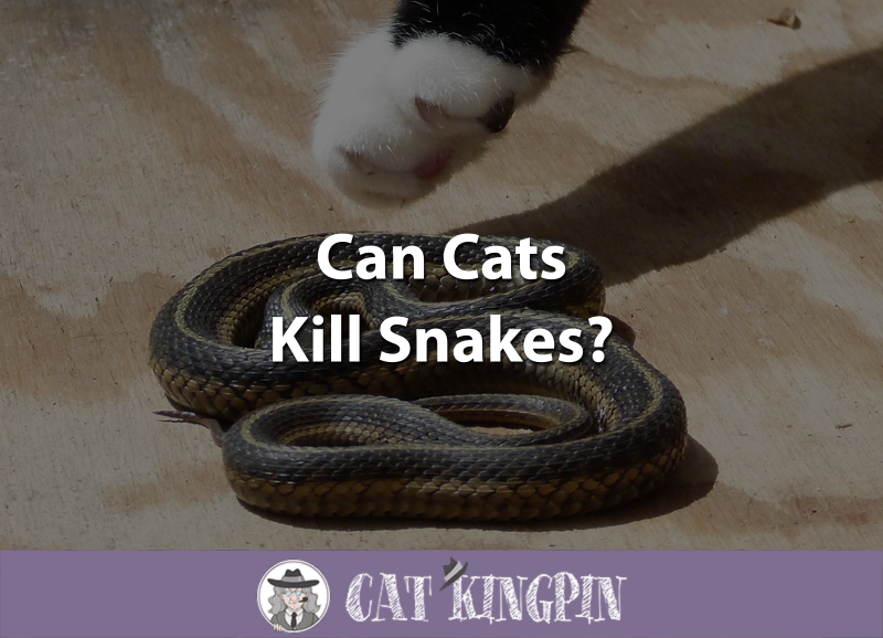 Can Cats Kill Snakes