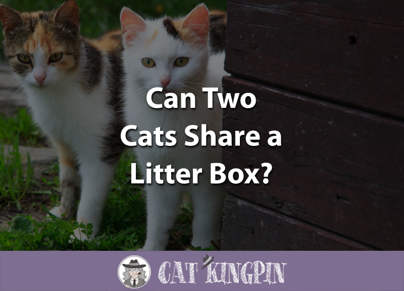 Can Two Cats Share a Litter Box