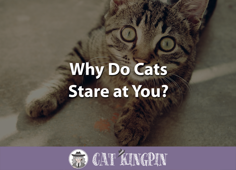 Why Do Cats Stare at You