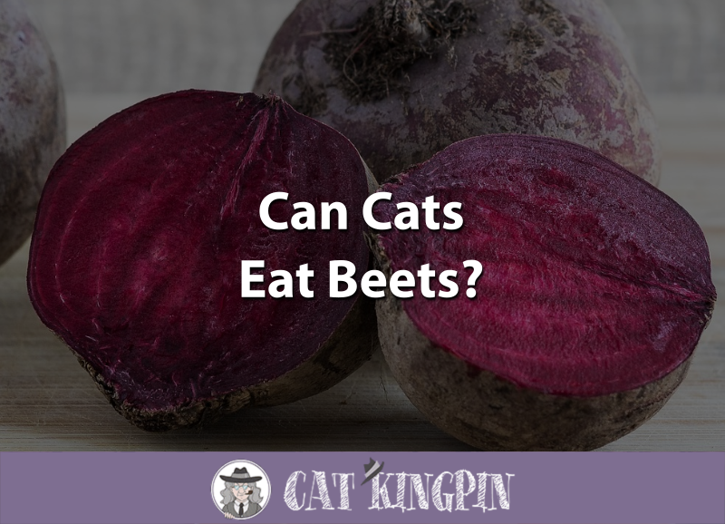 Can Cats Eat Beets