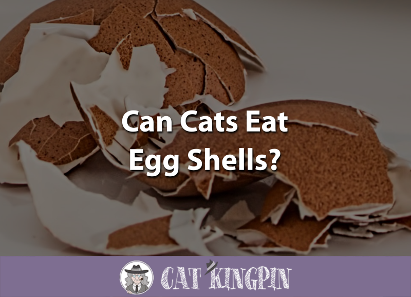 Can Cats Eat Egg Shells