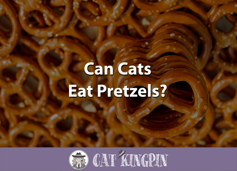 Can Cats Eat Pretzels