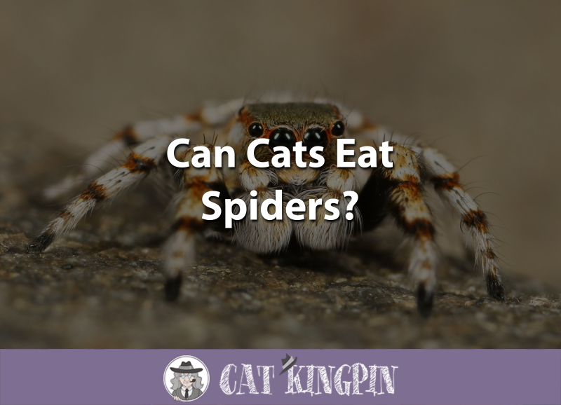 Can Cats Eat Spiders