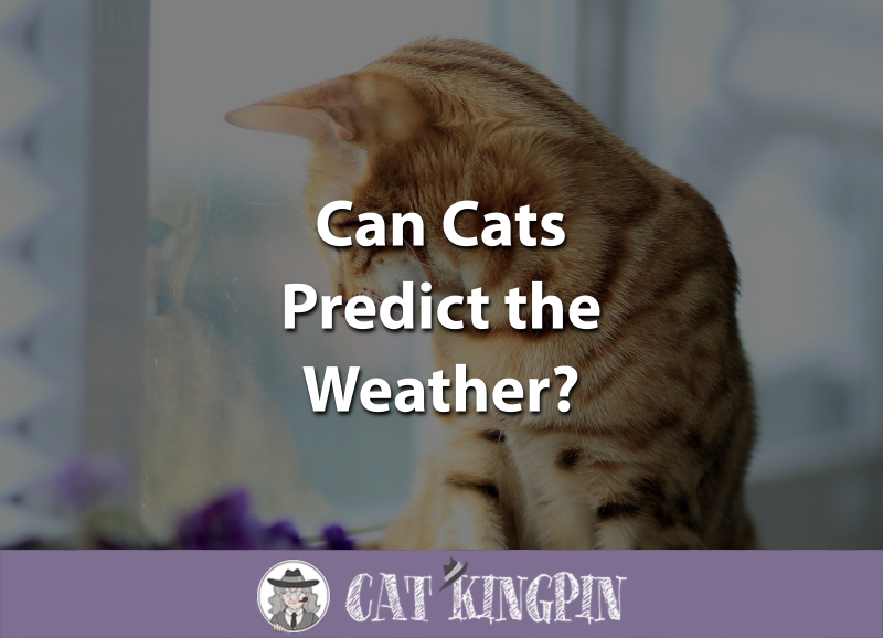 Can Cats Predict The Weather