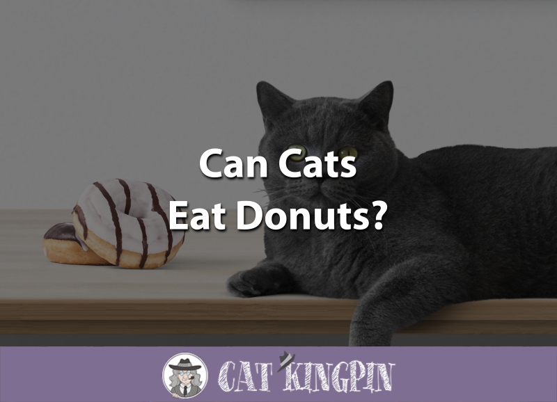 Can Cats Eat Donuts
