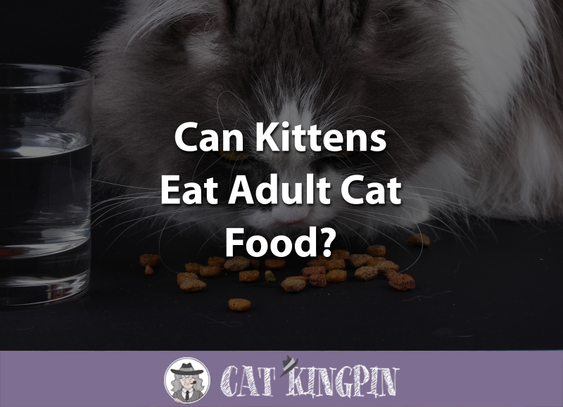 Can Kittens Eat Adult Cat Food