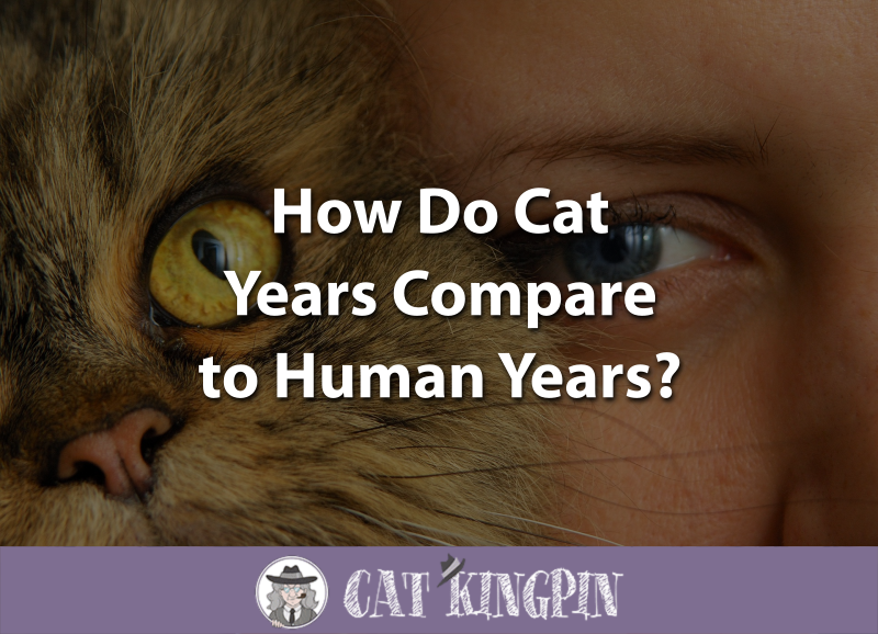 How Do Cat Years Compare to Human Years