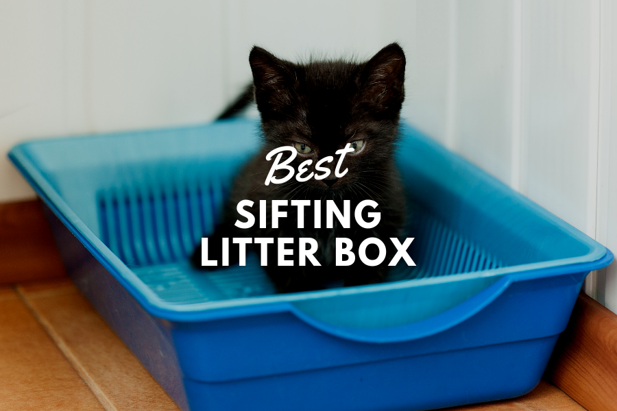 best sifting litter box